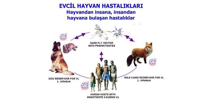 """PANEL-""""Evcil Hayvan Hastalıkları – Hayvandan İnsana, İnsandan Hayvana Bulaşan Hastalıklar"""""""