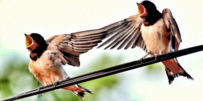 """Fotoğraf Sunumu """"Kuşlar"""""""