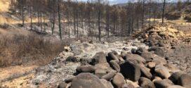 Adana-Merkez, Feke, Karaisalı, Kozan, Aladağ, Ceyhan İlçelerinde Orman Yangınları Hızlı Değerlendirme Raporu